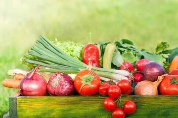 43 هزار تولید کننده محصولات ارگانیک در ایران/آینده کشاورزی ارگانیک درخشان است